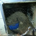 Chimney Nest Waste Exeter