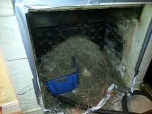 Chimney Nest Waste Exeter