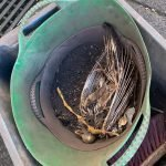 Dead bird in chimney